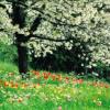 Stagioni: Primavera