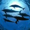 Mondo subacqueo